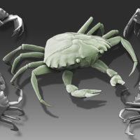 crab model